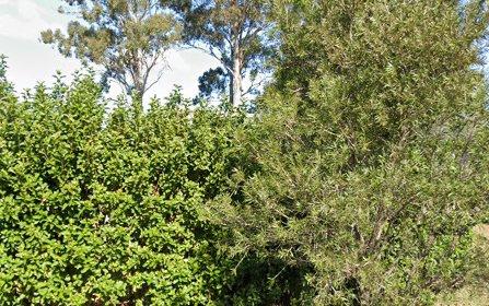 12 Bimbil Street, Blacktown NSW 2148