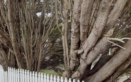 1 Charlish Lane, Lane Cove NSW