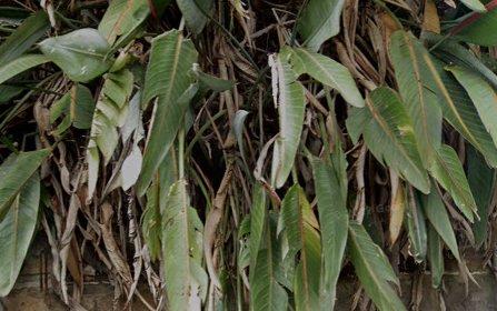 2/275 Edgecliff Rd, Woollahra NSW 2025