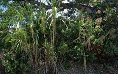 104 Clothiers Creek Road, Nunderi NSW