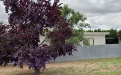 43 Heath Street, Turvey Park NSW