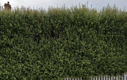 6 Rosemary Lane, Orange NSW