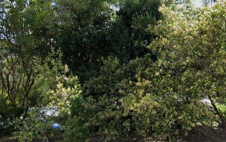 53 Melba Dr, East Ryde NSW 2113