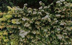 4/8 Marathon Road, Darling Point NSW