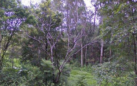 33 Bullgarra Road, Wilsons+Creek NSW