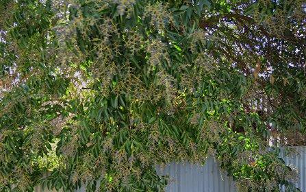 78 Farrand Street, Forbes NSW