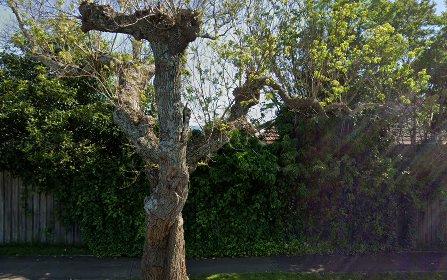 71 Parker Street, Bega NSW