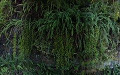 87 The Bulwark, Castlecrag NSW